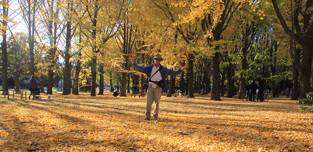 Gingko Trees in Yoyogi Park