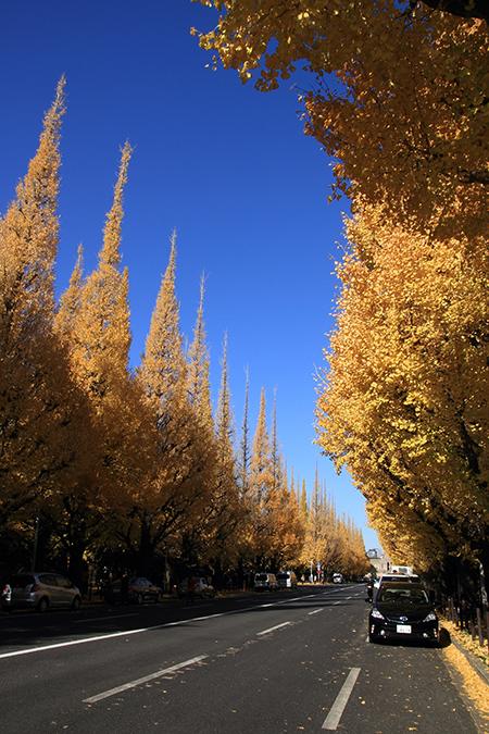 Icho Namiko Avenue