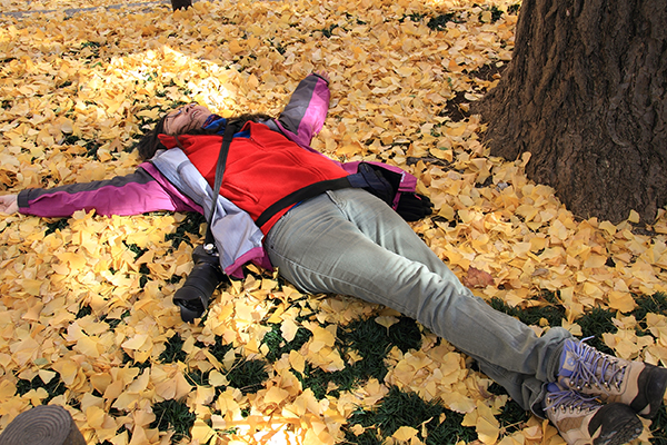 A bed of Gingko leaves