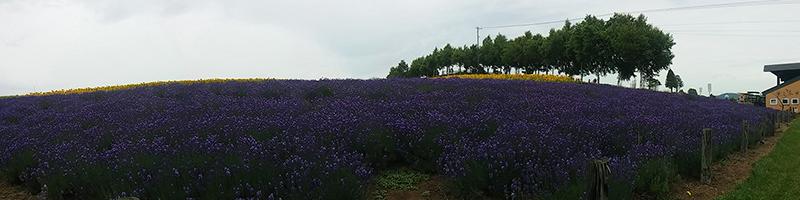 Lavender Field at Zerburu Hill