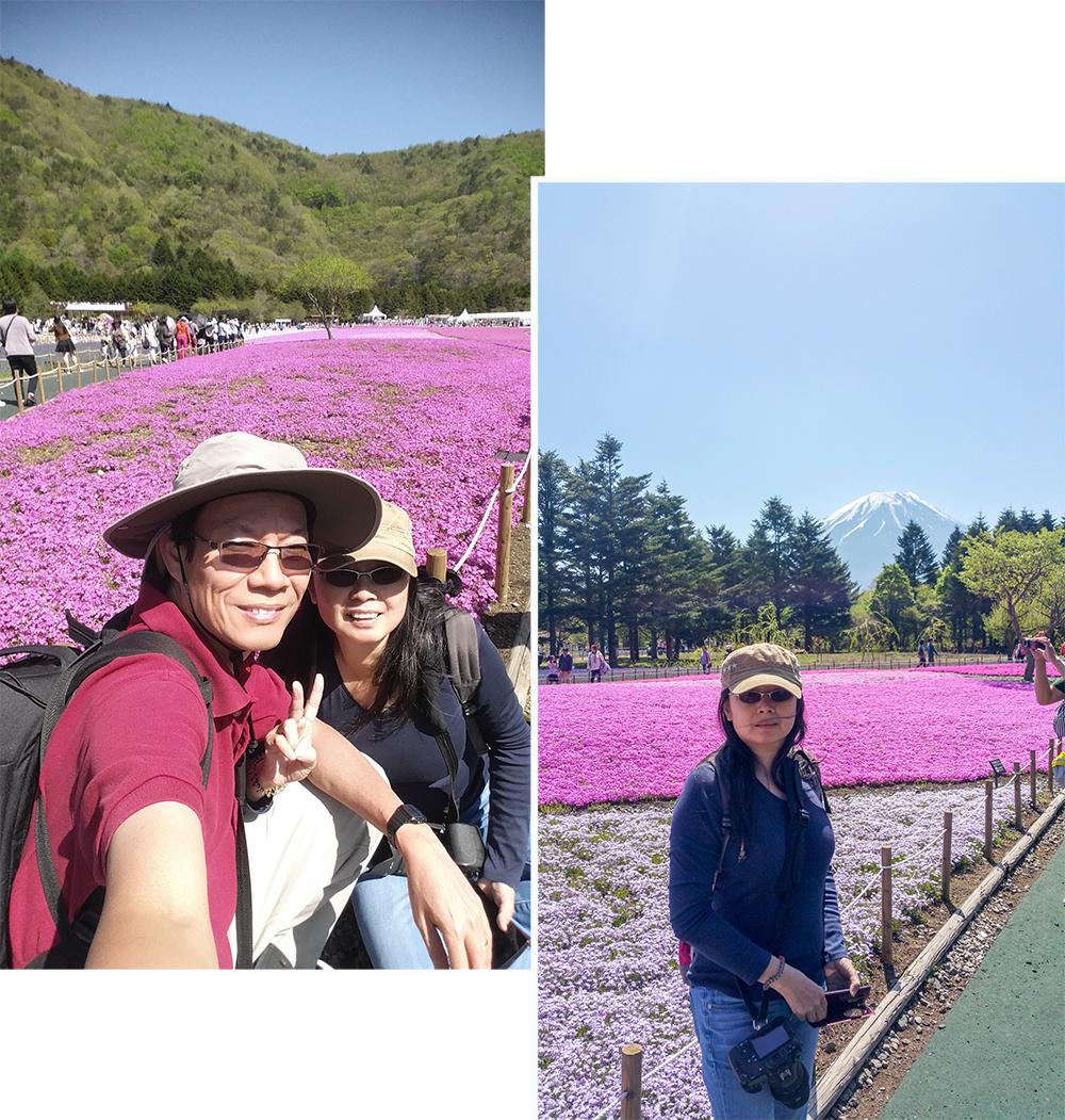 Pink Phlox Moss