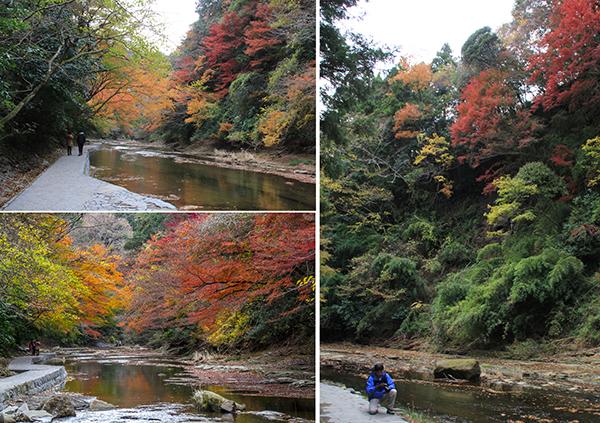 Koyo color of Yoro valley