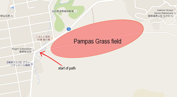 Location of Pampas Grass Field
