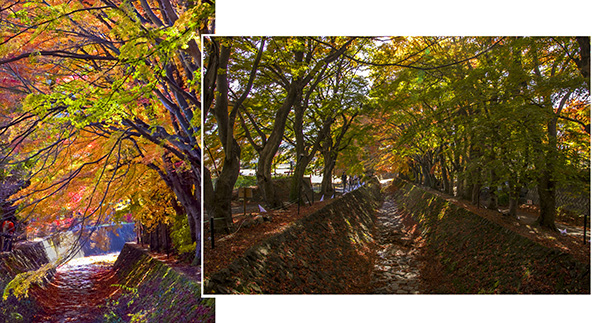 Lake Kawaguchi – Maple Corridor (Mapcode: 161 361 646*47)