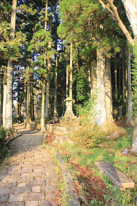Cedar Trees Forest
