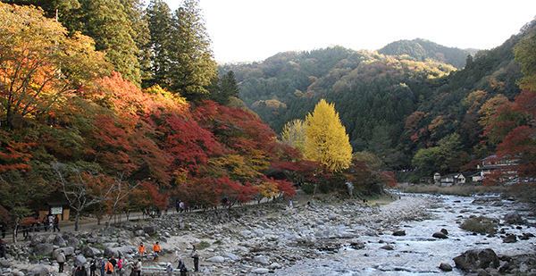 Another view of the Koyo trees along the River Tomoe