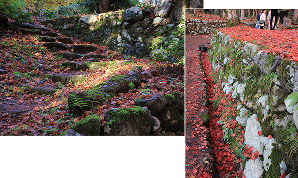 Some pockets of red leaves on the ground