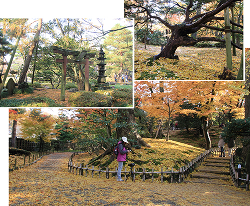 The ground was beautifully covered with yellow leaves