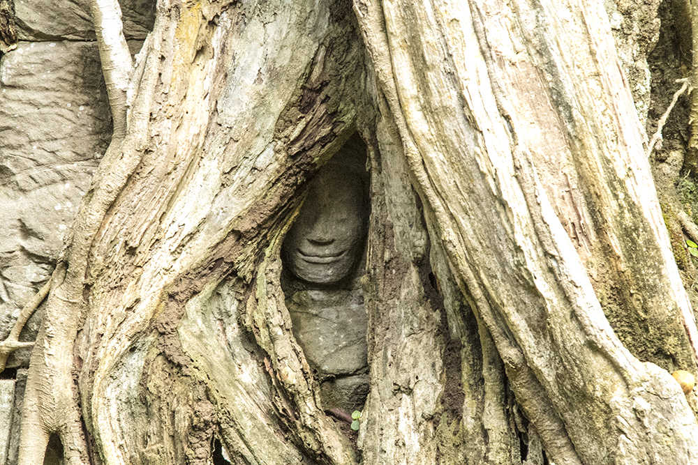 A root engulfed statue