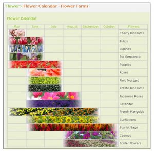 Best months for different flower types