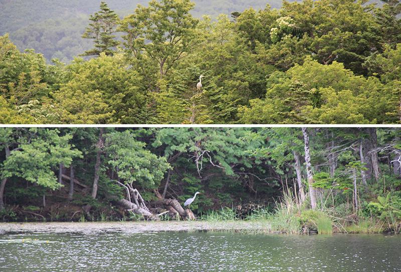 Birds sighting at the Lakes