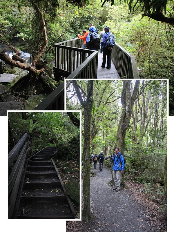Walking path to the Purakaunui Falls