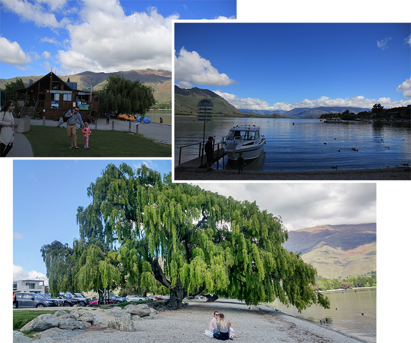 Waterfront of Roy's Bay at Lake Wanaka