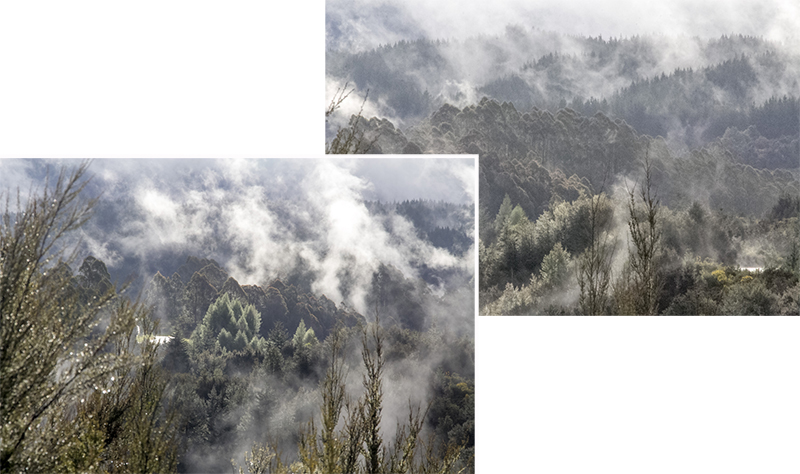 The rising mists brought out the shapes and forms of the trees in the valley