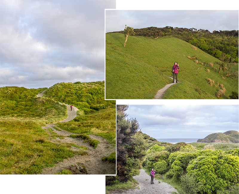 Walking from Wharariki Beach Holiday Park to Archway Island
