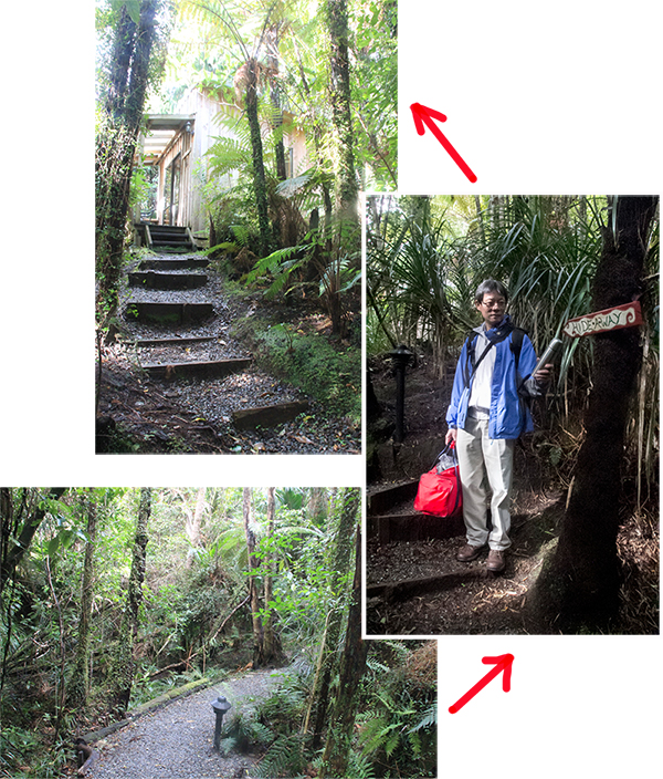 "Taking the ""jungle"" path to our room - ""Hideaway Cottage"""