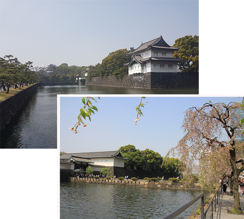 No cherry blossom on the bank of the moat of Chiyoda Imperial Palace