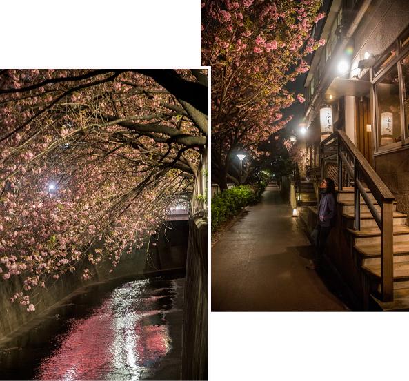Cherry Blossom Night spot at Meguro River