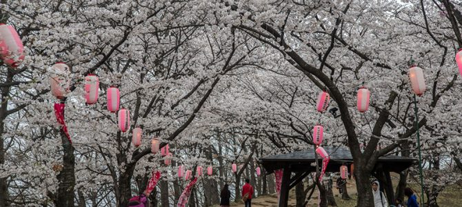 Day 3: Cherry Blossom at Matsumoto and Ina