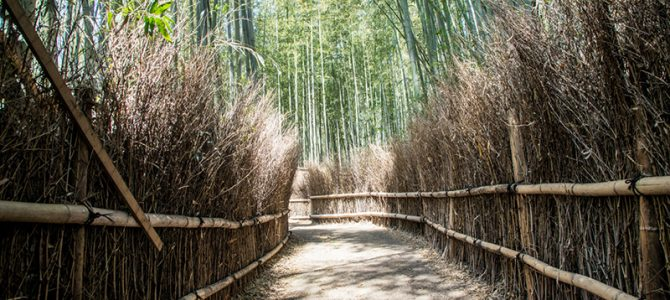 Day 7: Kyoto – Bamboo Forest and La Shomon