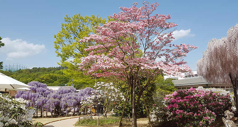 Flower in the Ashikaga Flower Park