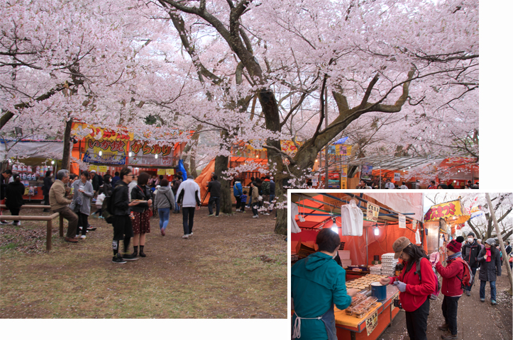 Yummy street food under the cherry blossom