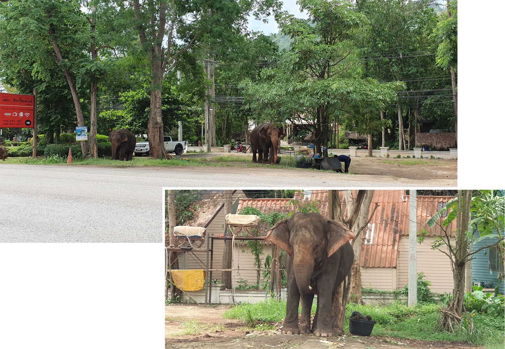 Elephants by the side of the road at Khao Yai National Park