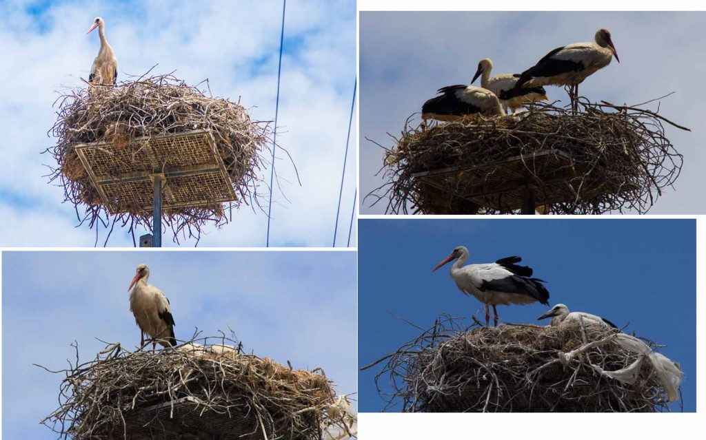 nest, nest, nest