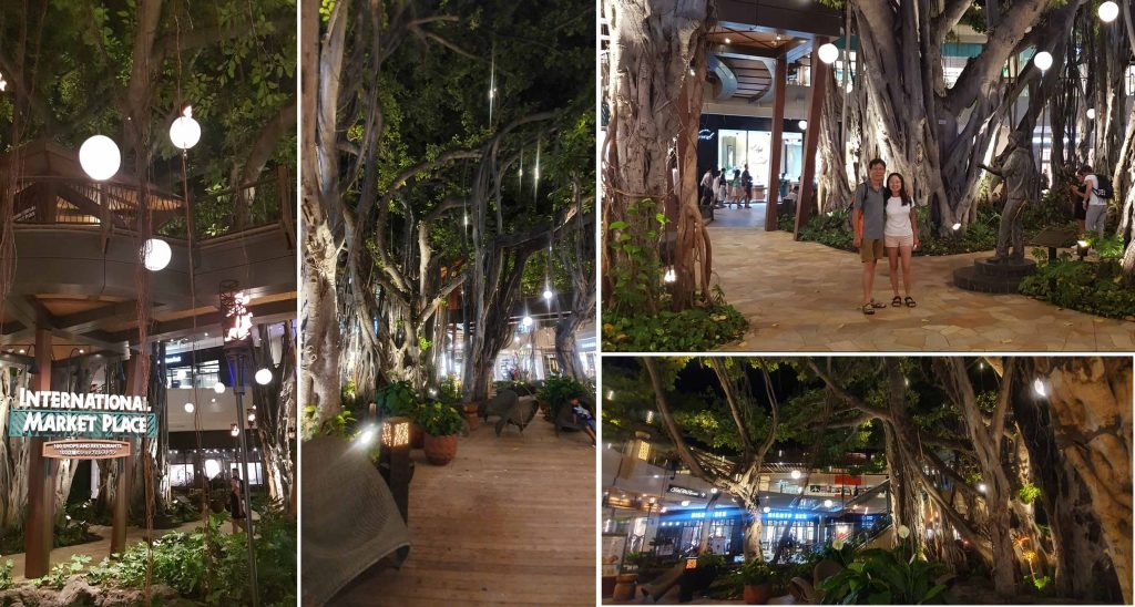 160 year old Banyan tree at International Market Place