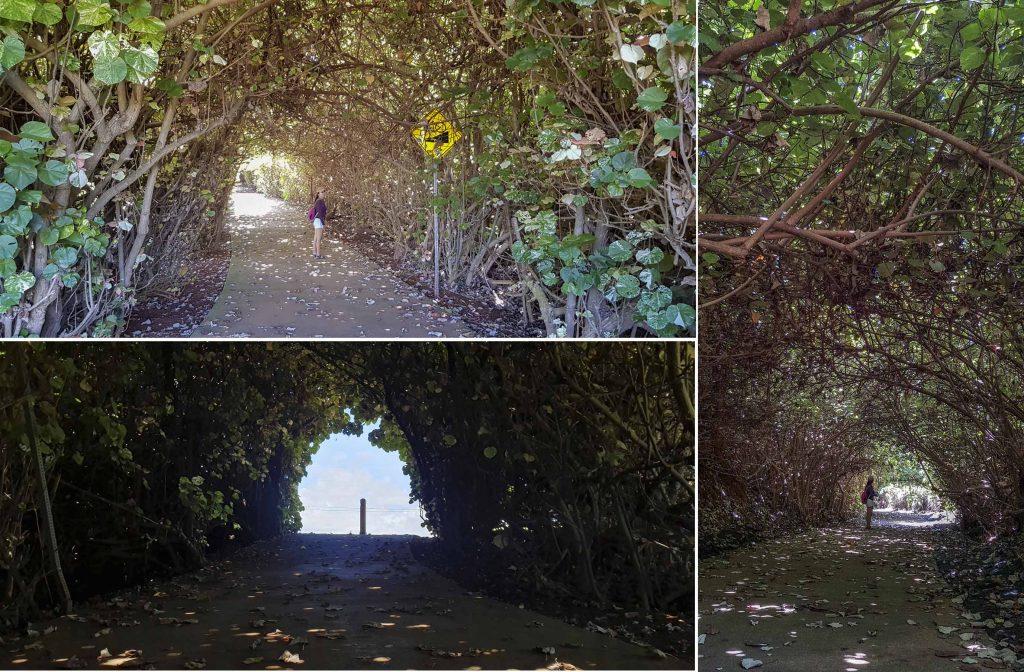 """""""Tree Tunnel"""" to Paliku Beach"""