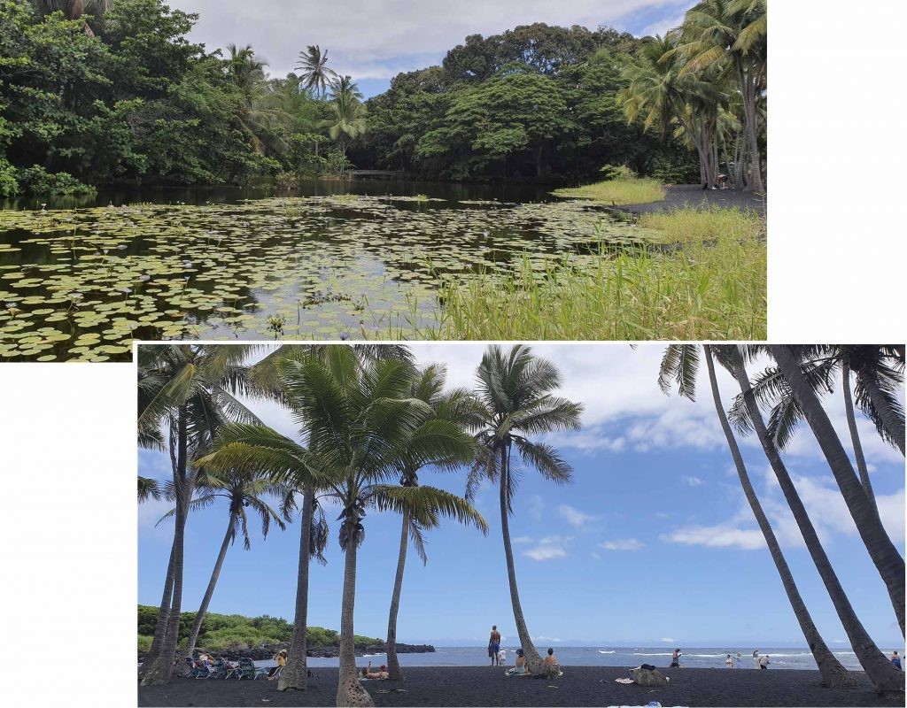 Lily pond at Punalu'u black sand beach