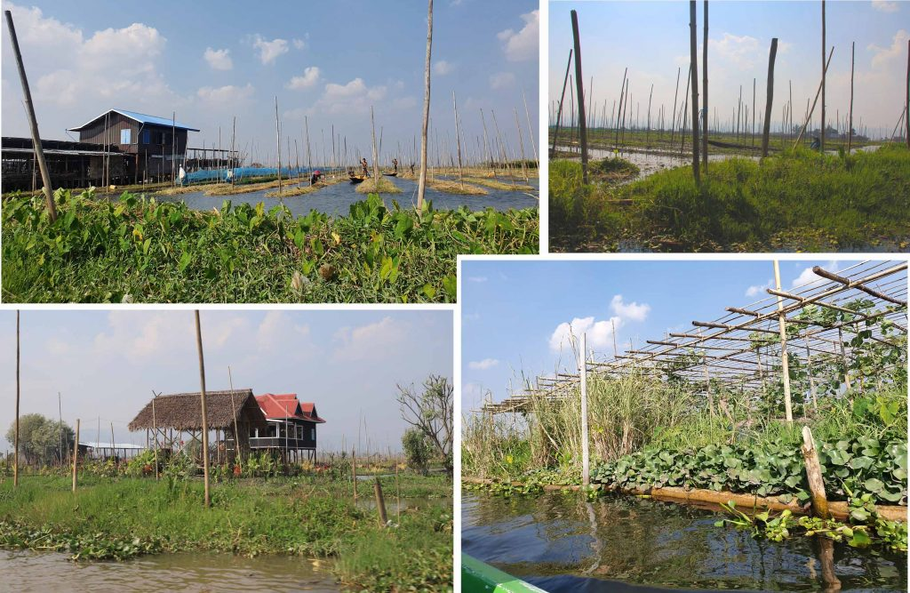 """A """"floating"""" vegetable garden on Inle Lake"""