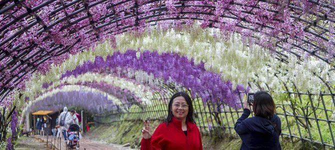 Day 1: Kawachi Fuji Garden & Miyajima