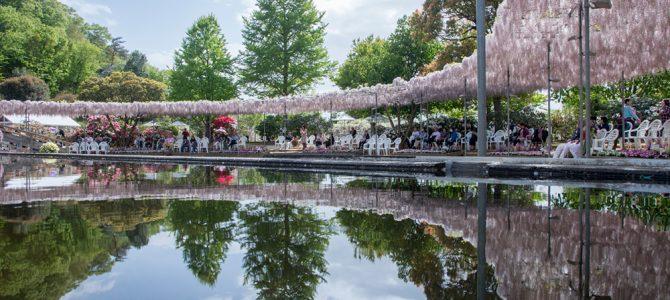 Day 13: Ashikaga Flower Park
