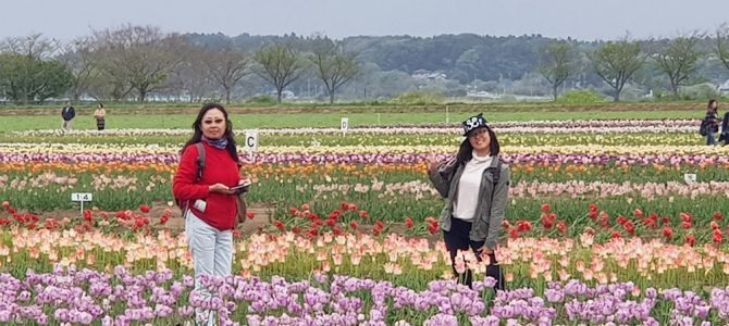 Day 14: Sakura City Tulip Park