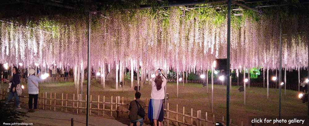 Spring in Japan